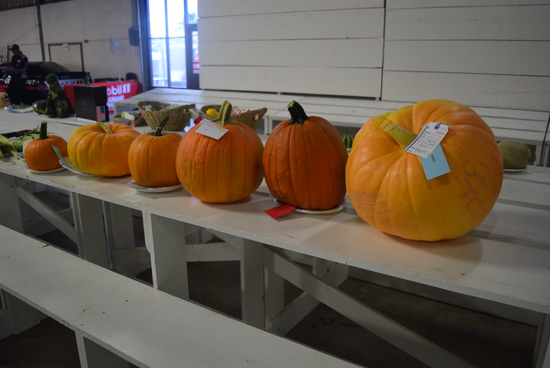 Award winning pumpkins were on display underneath the grandstands Saturday, Aug. 6, 2016, at the Logan County Fair.