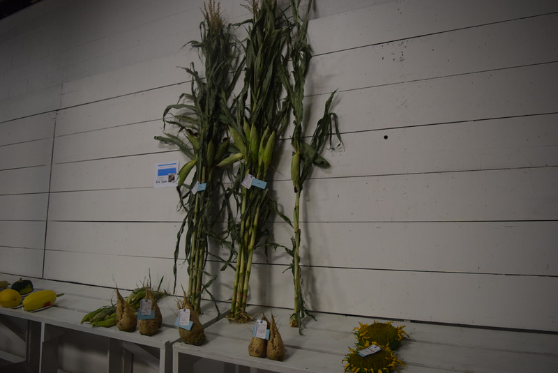 Award winning field crops were on display underneath the grandstands Saturday, Aug. 6, 2016, at the Logan County Fair.