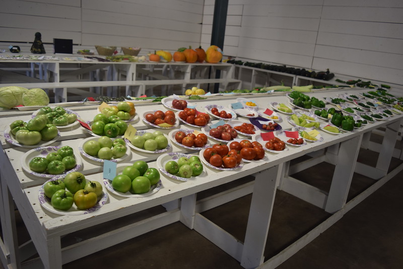 Award winning vegetables were on display underneath the grandstands Saturday, Aug. 6, 2016, at the Logan County Fair.