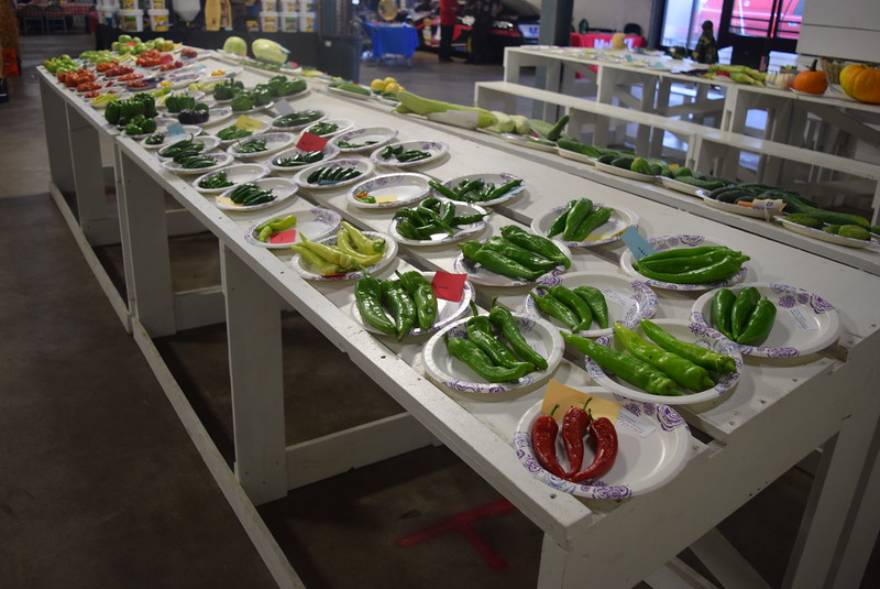 Award winning peppers were on display underneath the grandstands Saturday, Aug. 6, 2016, at the Logan County Fair.