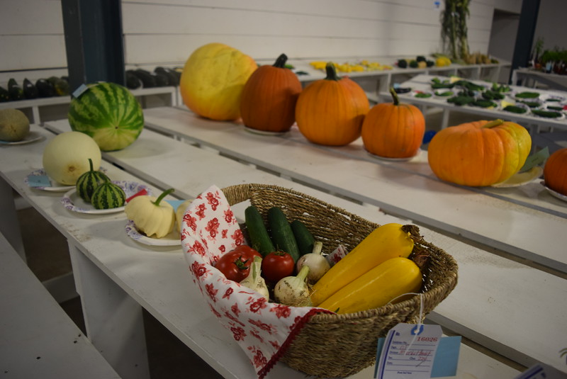 Award winning vegetables, fruit and market baskets were on display underneath the grandstands Saturday, Aug. 6, 2016, at the Logan County Fair.