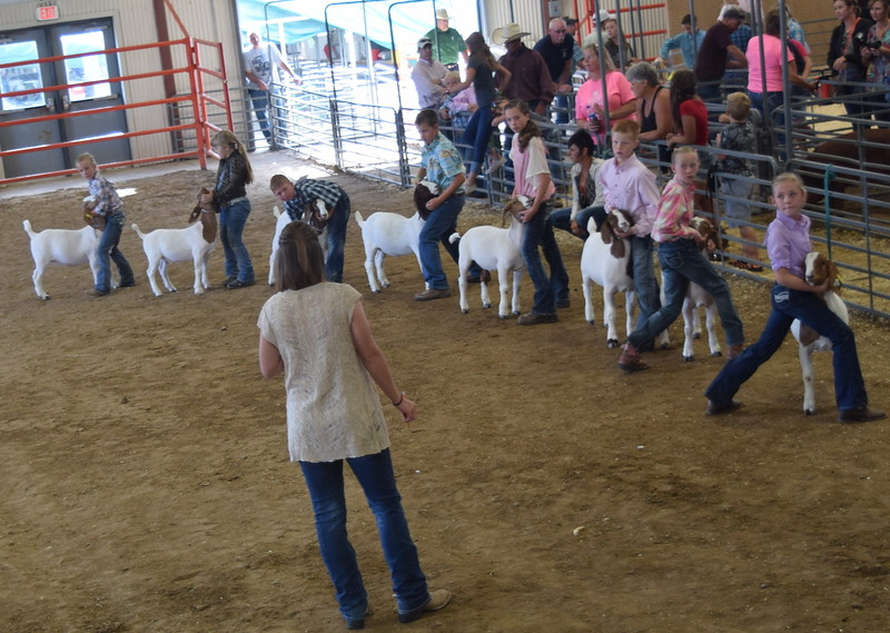 Intermediate showmen watch the judge as they hold onto their goats during the Round Robin Showmanship Contest Friday, Aug. 5, 2016, at the Logan County Fair. From left; Hallie Lewis, Hadlie Robinette, Tyler Mill, Jaxon Samber, Jalyssa Maker, Colton Hadeen, Tobi-Beth Erickson and Tyla Thomas.