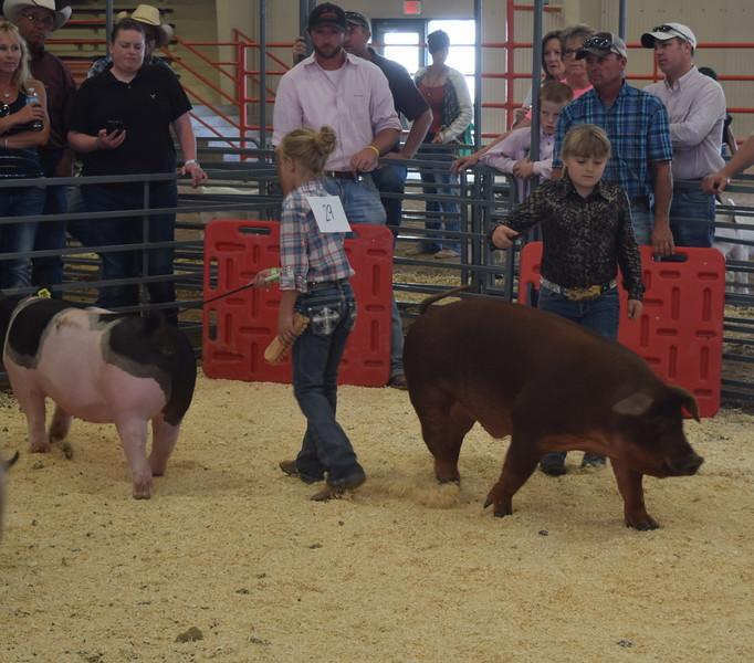 Junior showman Hallie Lewis and Hadlie Robinette lead their swine around the pen during the Round Robin Showmanship Contest Friday, Aug. 5, 2016, at the Logan County Fair.