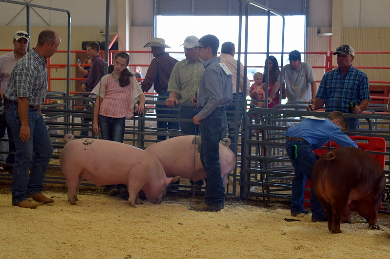 Jaylssa Maker, junior, and Jayce Maker, senior, talk with the judge as they show their swine during the Round Robin Showmanship Contest Friday, Aug. 5, 2016, at the Logan County Fair.