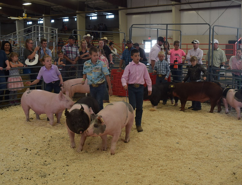Junior showmen Tyla Thomas, Jaxon Samber, Slayter Goss and Beau Carlson move their swine around the ring during the Round Robin Showmanship Contest Friday, Aug. 5, 2016, at the Logan County Fair.