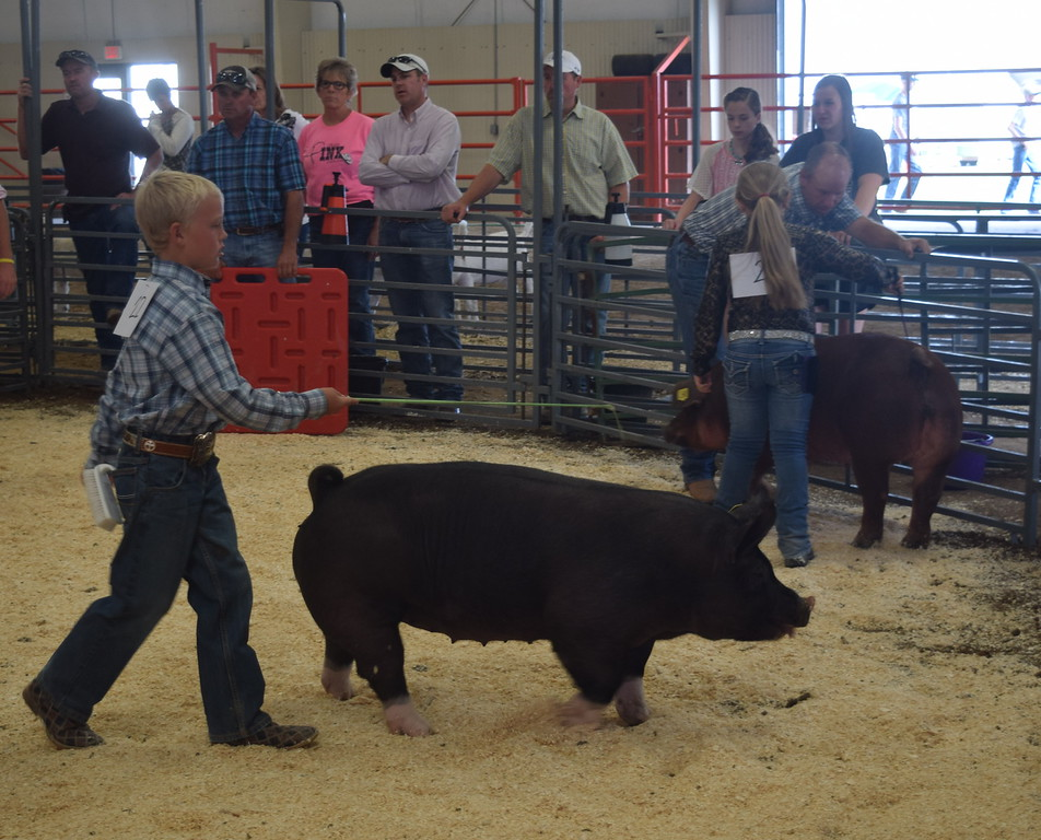Junior showman Beau Carlson leads his swine around the pen during the Round Robin Showmanship Contest Friday, Aug. 5, 2016, at the Logan County Fair.