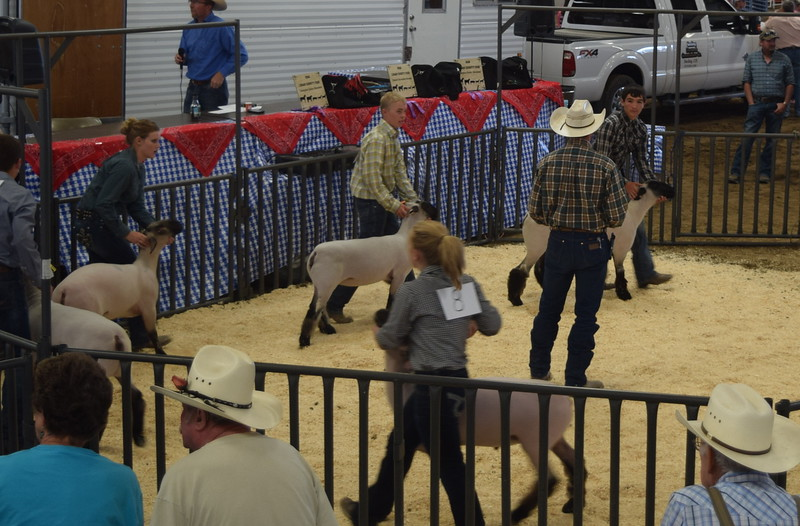 Senior showmen Cassidy Paxton, Cooper Carlson and Tyler Gentry lead their sheep around the ring during the Round Robin Showmanship Contest Friday, Aug. 5, 2016, at the Logan County Fair.