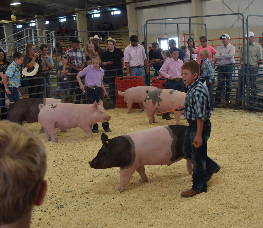 Junior showmen Jaxon Samber, Tyla Thomas, Slayter Goss Tyler Miller move their pigs around the ring during the Round Robin Showmanship Contest Friday, Aug. 5, 2016, at the Logan County Fair.