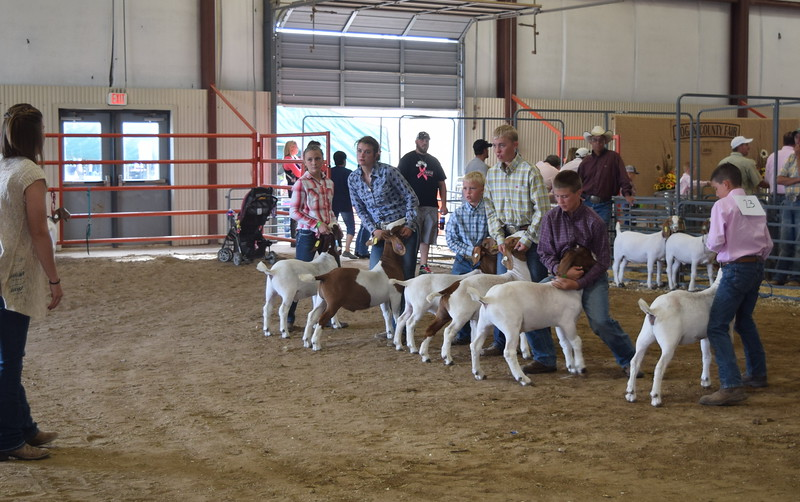 Kaitlynn Storch, intermediate; Kristi Cook, senior; Beau Carlson, junior; Cooper Carlson, senior; Kayd Goss, intermediate; and Slayter Goss, junior, show their goats during the Round Robin Showmanship Contest Friday, Aug. 5, 2016, at the Logan County Fair.