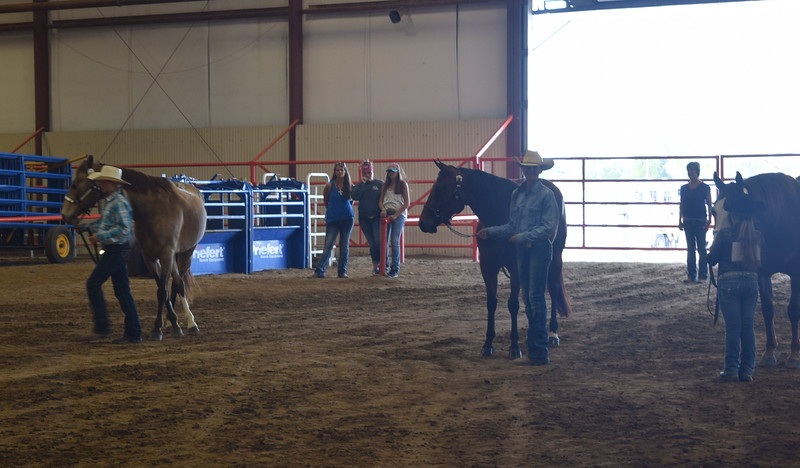 From left; Jenna East, intermediate; Abby Bud, intermediate; and Hadlie Robinette, junior, show their horses during the Round Robin Showmanship Contest Friday, Aug. 5, 2016, at the Logan County Fair.