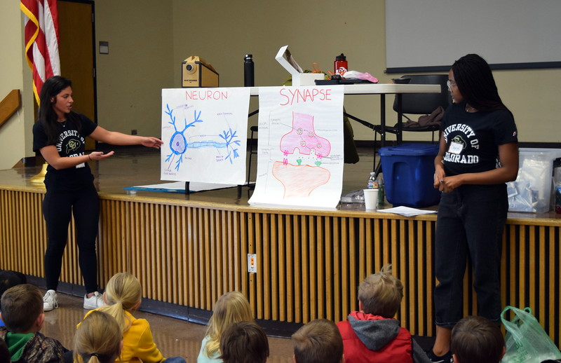 University of Colorado Boulder students talk to area elementary students about neurons and synapse during a Brain Awareness Day presented by the Intermountain Neuroimaging Consortium Friday, Feb. 8, 2019, at Northeastern Junior College.