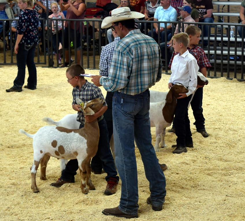 . Middle heavyweight contest Logan County Fair Junior Goat Show Wednesday, Aug. 8, 2018.