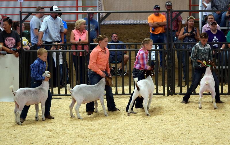 Logan County Fair Junior Goat Show Showmanship Contest Wednesday, Aug. 8, 2018.
