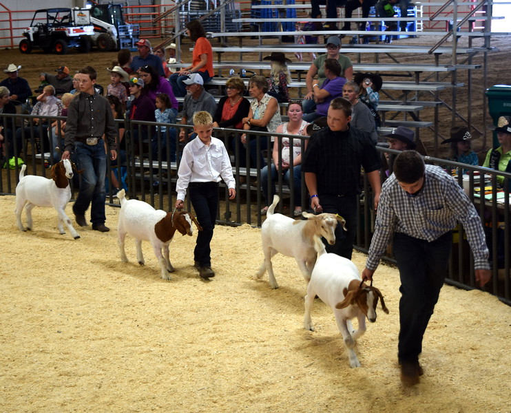 Logan County Fair Junior Goat Show Showmanship Contest Wednesday, Aug. 8, 2018.