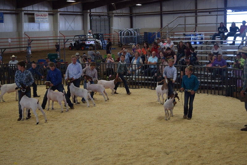 Champion and reserve champion drive at the Logan County Fair Junior Goat Show Wednesday, Aug. 8, 2018.