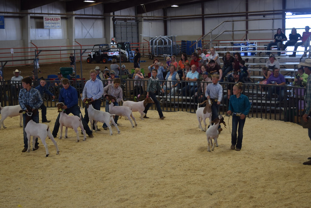 . Champion and reserve champion drive at the Logan County Fair Junior Goat Show Wednesday, Aug. 8, 2018.
