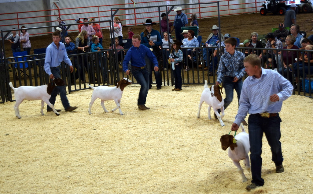 . The top senior showman lead their animals around the ring during the Logan County Fair Junior Goat Show Wednesday, Aug. 8, 2018. Cooper Carlson, right, was named champion showman, and Kolton Dickinson, second from left, was reserve champion.