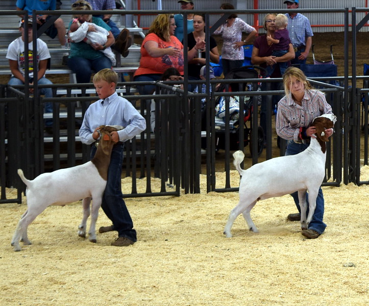 The top intermediate showman keep a hold of their animals as they watch the judge during the Logan County Fair Junior Goat Show Wednesday, Aug. 8, 2018. Beau Carlson was named grand champion and Amanda Thorpe was reserve champion.