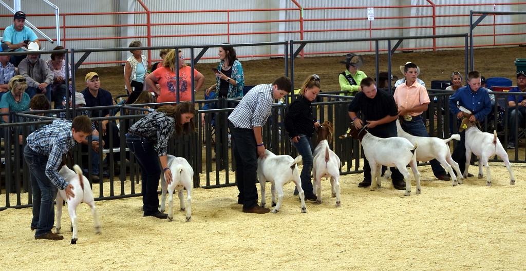 . Heavyweight contest Logan County Fair Junior Goat Show Wednesday, Aug. 8, 2018.