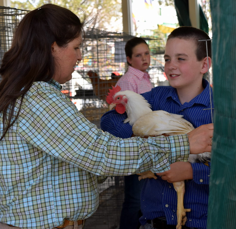 . Braylon Bruns shows his bird to judge Kyla Foltz in the roosters class of the Logan County Fair Junior Poultry Show Thursday, Aug. 9, 2018.