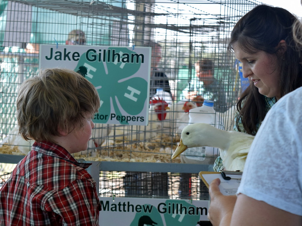 . Connor Emrick watches as judge Kyla Foltz feels his duck in the pen of three duck class contest at the Logan County Fair Junior Poultry Show Thursday, Aug. 9, 2018.