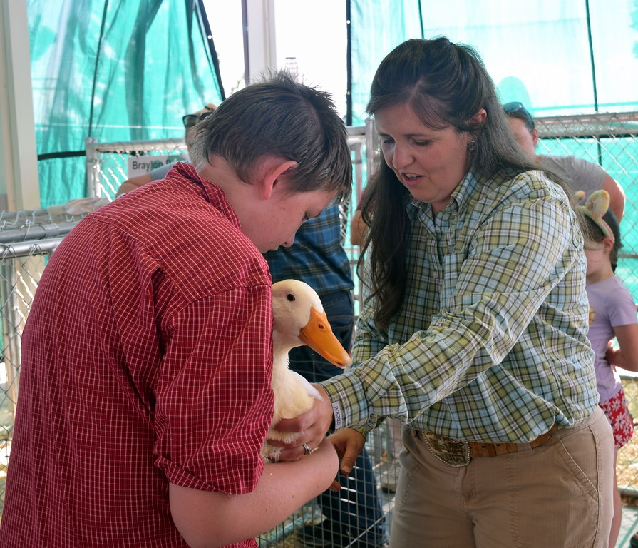 . Judge Kyla Foltz feels the duck of Josh Emrick in the pen of three duck class contest at the Logan County Fair Junior Poultry Show Thursday, Aug. 9, 2018.