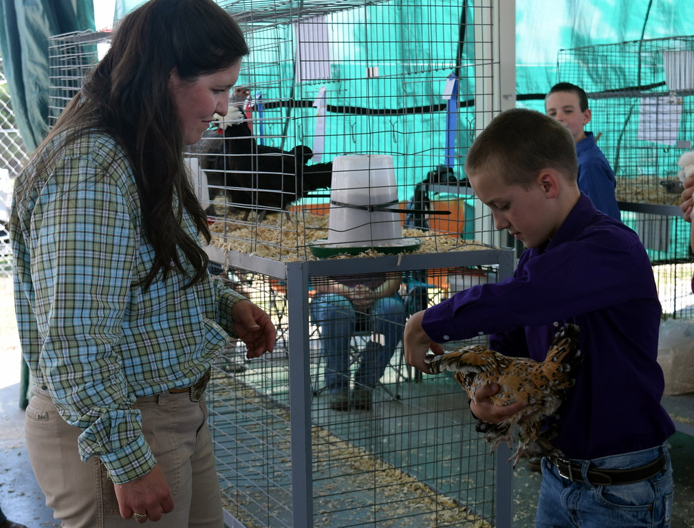 . Caiden Bruns shows his bird to judge Kyla Foltz in the feather footed bantom class of the Logan County Fair Junior Poultry Show Thursday, Aug. 9, 2018.