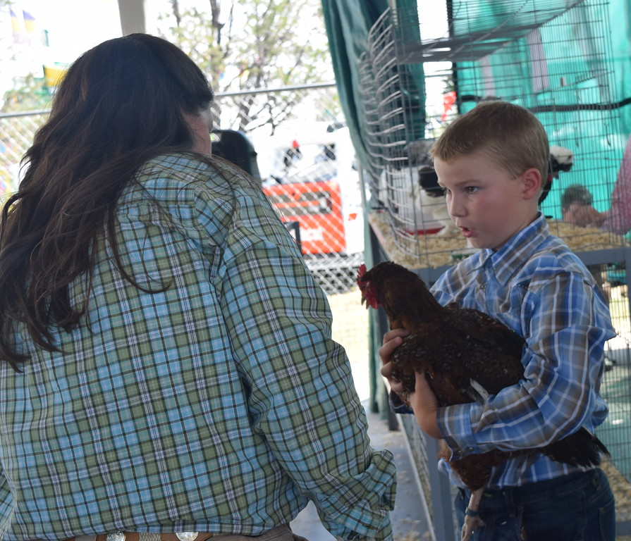 . Harper Johnson shows his animal to judge Kyla Foltz in the egg production pullets class of the Logan County Fair Junior Poultry Show Thursday, Aug. 9, 2018. He was named Reserve Champion for Non-Production Poultry.