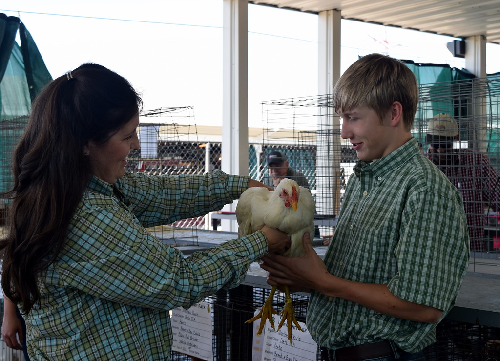 . Matthew Davis holds his bird as judge Kyla Foltz feels its shape in the pen of three market breeding class at the Logan County Fair Junior Poultry Show Thursday, Aug. 9, 2018.