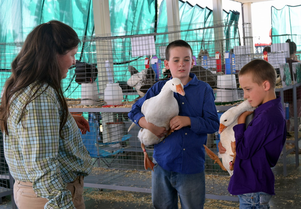 . Braylon Bruns, left, shows his two geese to judge Kyla Foltz with the help of his brother, Kaiden, during the production poultry competition at the Logan County Fair Junior Poultry Show Thursday, Aug. 9, 2018.