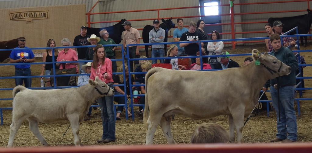 . Logan County Fair Junior Beef Show Friday, Aug. 10, 2018.