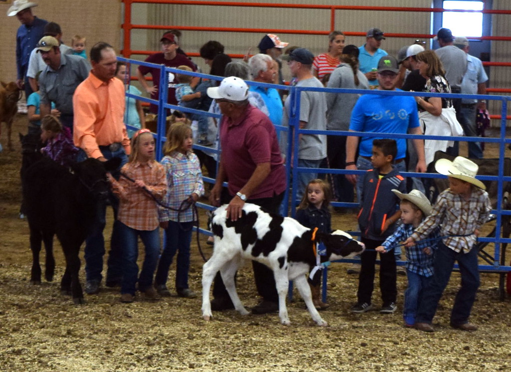 . Ed and Hazel Korrey Memorial Bucket Calf Show Friday, Aug. 10, 2018, at the Logan County Fair.