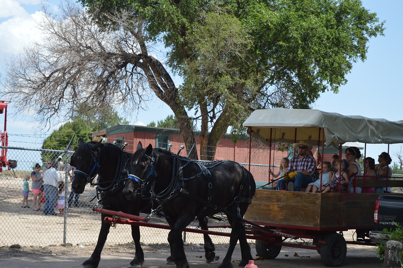 Gentle Giants Carriage and Wagons provided rides for afternoon visitors. (Sara Waite/Journal-Advocate)