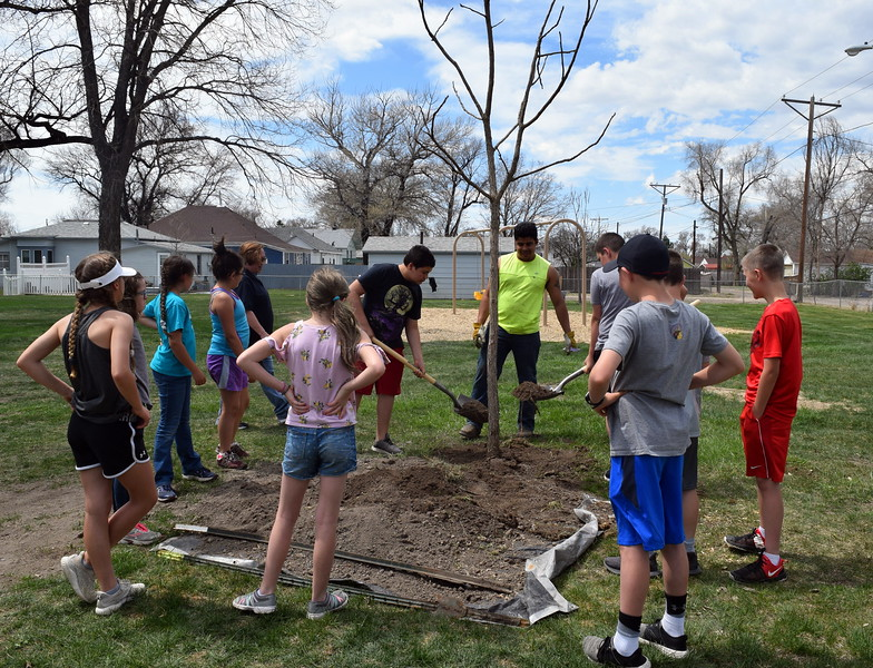 Merino Elementary fifth graders help plant a tree at Monahan Park during the city of Sterling's annual Arbor Day celebration Friday, April 26, 2019.