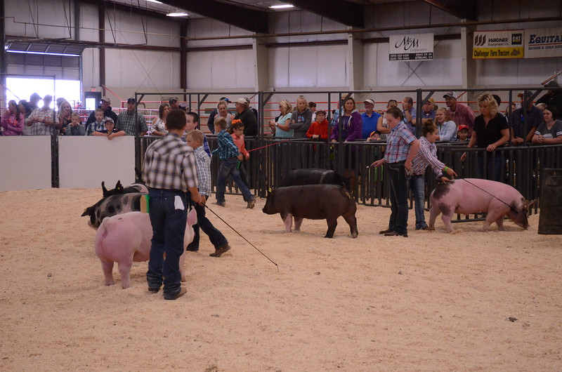 Junior_Showmanship