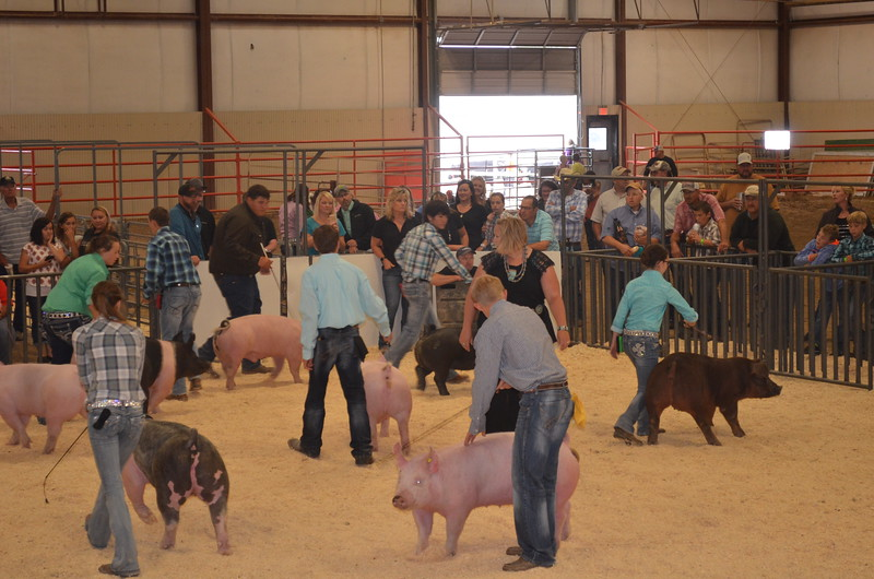 Senior_Swine_Showmanship