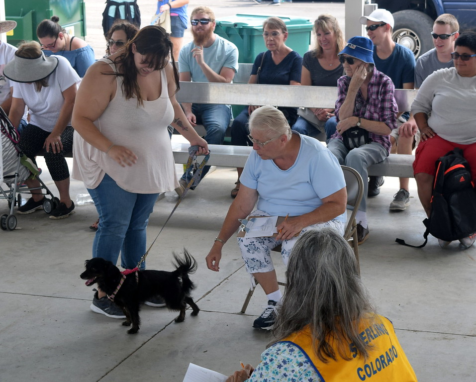 ". Judge Lana Tramp reaches to pet Charlie Adlesperger\'s chi-weenie Dakota during the Sterling Lions Club\'s Friendly Dog ""Tail Wagging\"" Contest Saturday, Aug. 12, 2017, at the Logan County Fair. Adlesperger and Dakota were the champions in the senior division."