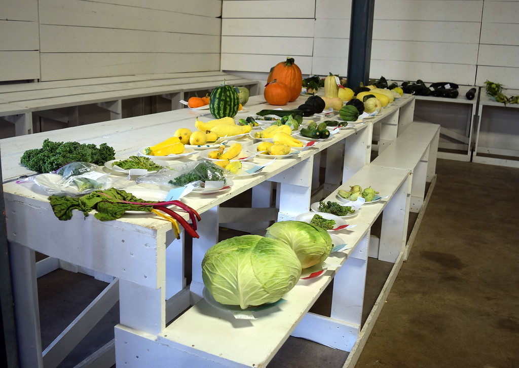 . A variety of vegetables in the open class contest were on display underneath the grandstands Saturday, Aug. 12, 2017, at the Logan County Fair.