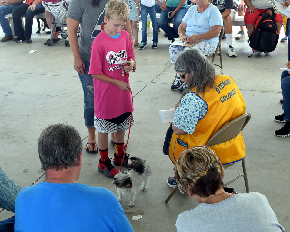 ". Judge Sharon Norton looks over Zephran Atkinson\'s yorkie/huahua Pressly during the Sterling Lions Club\'s Friendly Dog ""Tail Wagging\"" Contest Saturday, Aug. 12, 2017, at the Logan County Fair. Atkinson and Pressly were the champions in the junior division."