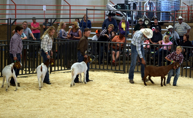 Competitors in the class 9 middle weight division lead their animals around the ring during the Junior Goat Show Wednesday, Aug. 9, 2017, at the Logan County Fair.