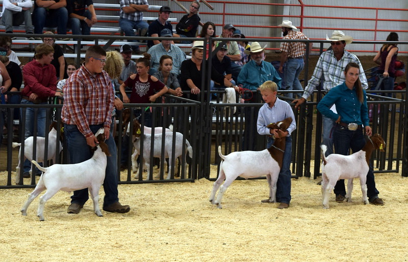 The top three competitors in the class 8 middle weight division, Beau Carlson, center, Wacey Day and Thomas Rutherford, listen to the judges remarks as they position their animals during the Logan County Fair Junior Goat Show Wednesday, Aug. 9, 2017.