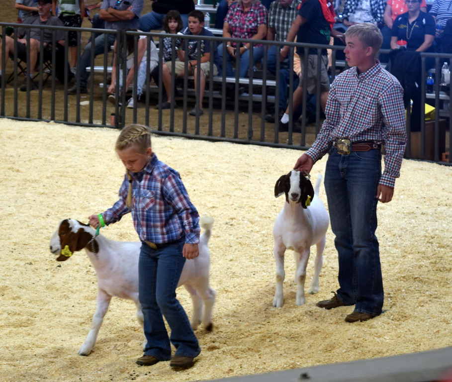 Competitors in the class 9 middle weight contest lead their animals around the ring during the Junior Goat Show Wednesday, Aug. 9, 2017, at the Logan County Fair.