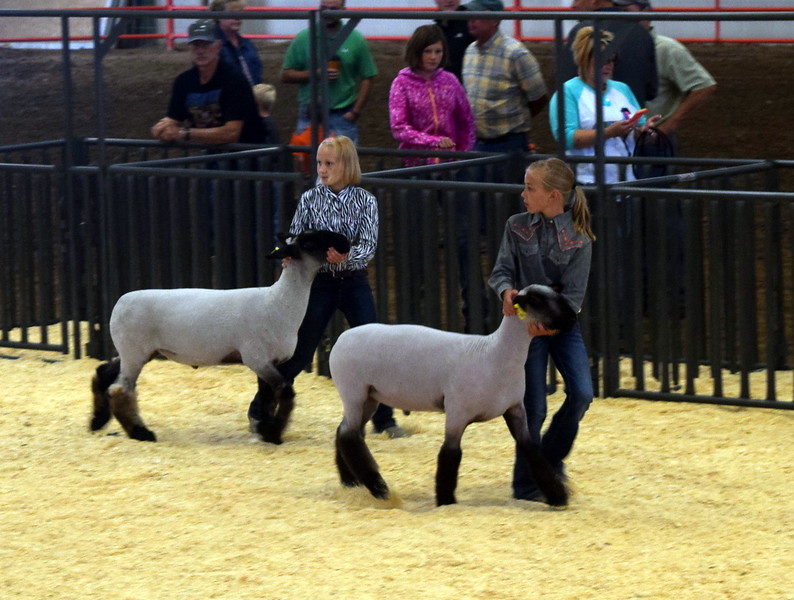 Class 3 middle weight competitors lead their animals around the ring during the Junior Sheep Show Wednesday, Aug. 9, 2017, at the Logan County Fair.