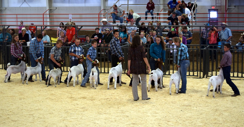 Intermediate showman watch as the judge looks over their animals during the Junior Goat Show Wednesday, Aug. 9, 2017, at the Logan County Fair.