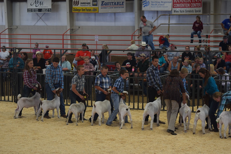 Intermediate showman