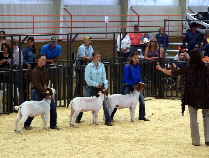 Top competitors in the class 10 middle weight division watch as the judge signals their placings the Junior Goat Show Wednesday, Aug. 9, 2017, at the Logan County Fair.