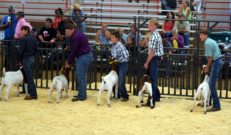 Competitors in the second round of the senior showmanship contest keep a close watch on the judge as they position their animals during the Junior Goat Show Wednesday, Aug. 9, 2017, at the Logan County Fair.