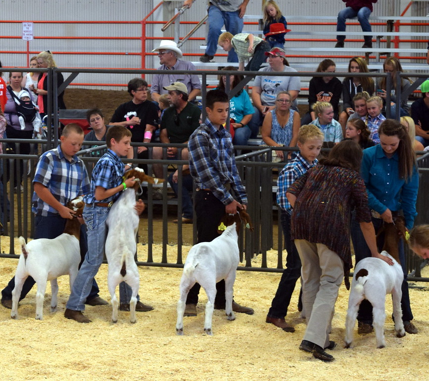 The judge looks over animals in the intermediate showmanship contest during the Junior Goat Show Wednesday, Aug. 9, 2017, at the Logan County Fair.