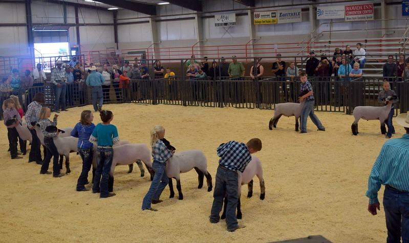 Junior showmanship competitors position their animals during the Junior Sheep Show Wednesday, Aug. 9, 2017, at the Logan County Fair.