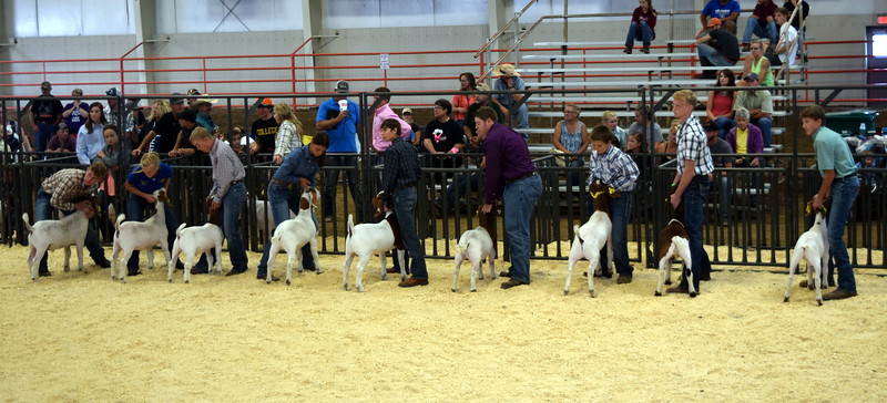 Competitors in the second round of the senior showmanship contest position their animals during the Junior Goat Show Wednesday, Aug. 9, 2017, at the Logan County Fair.